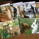 alpaca greeting card set